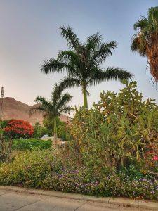 גם הגן הבוטני הנמוך בעולם לוקח חלק בחגיגת יום הגנים הבוטניים