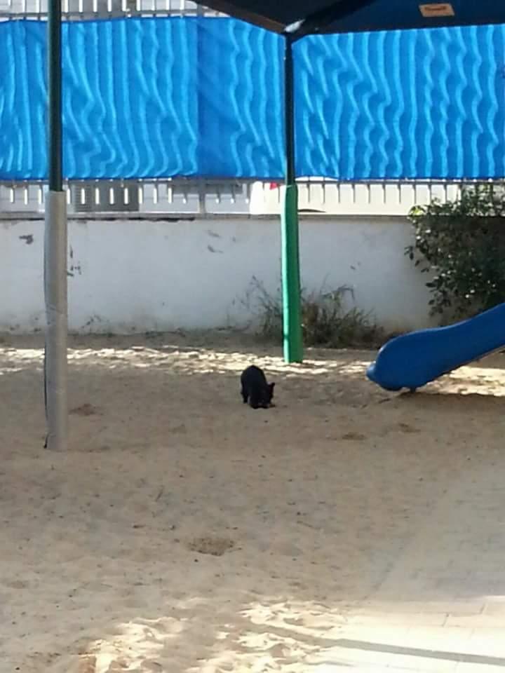 בת 3 נעקצה  במגרש החול בגן העירייה