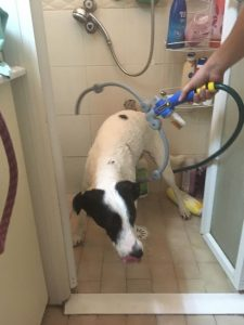 woof washer, ווף וושר או איך אתם רוחצים את החברה / הכלבה שלכם?